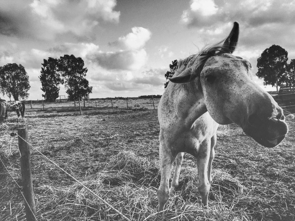 ritratti fotografici animali
