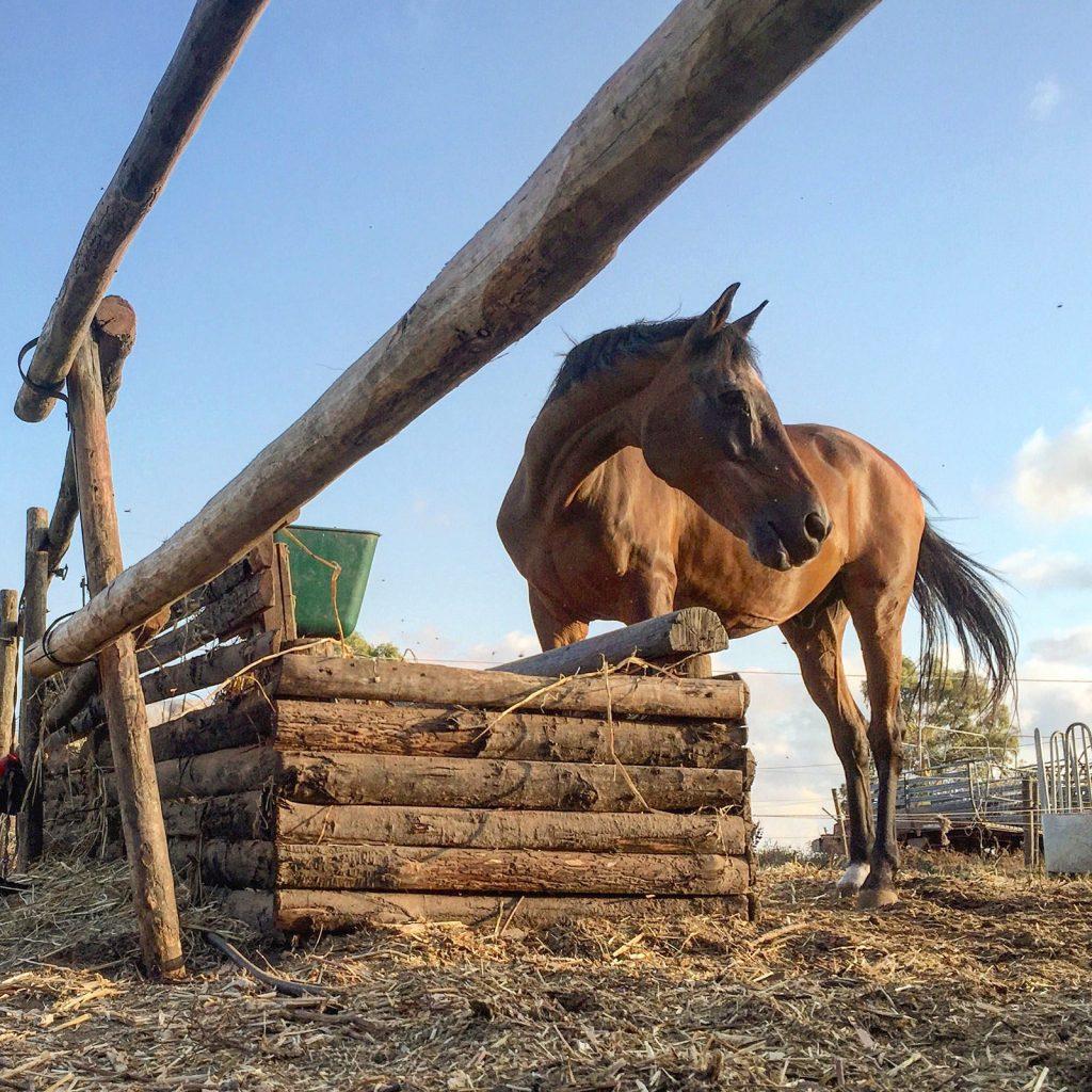 book fotografico con cavallo