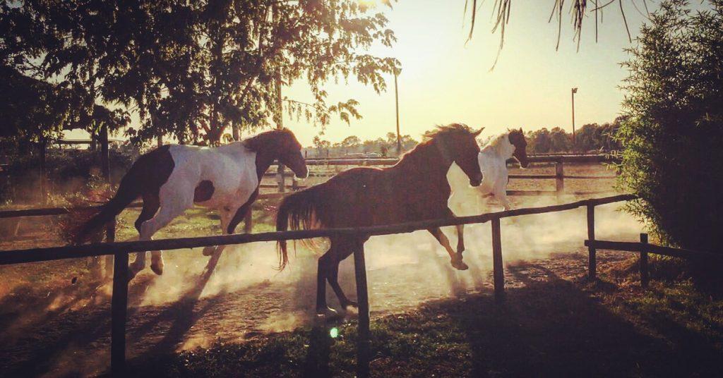 servizio fotografico con cavallo