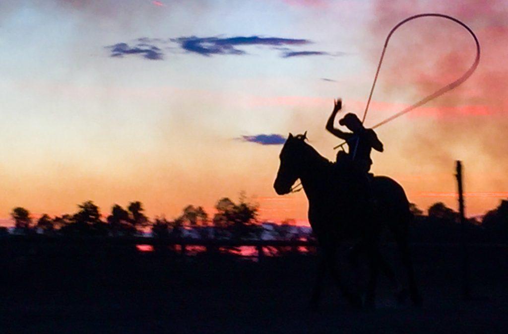 fotografare un cavallo