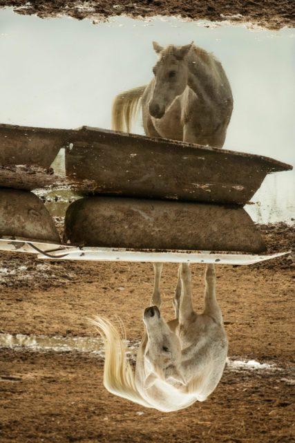foto cavalli roma