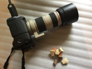 fotografare animali