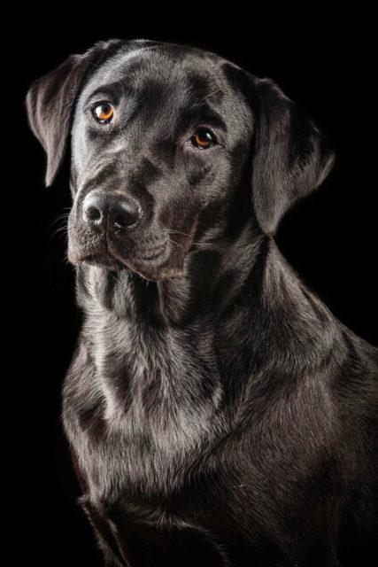 paura del cane nero