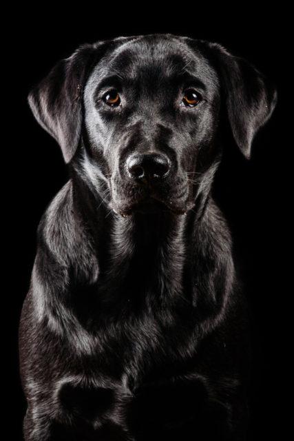 foto cani su sfondo nero