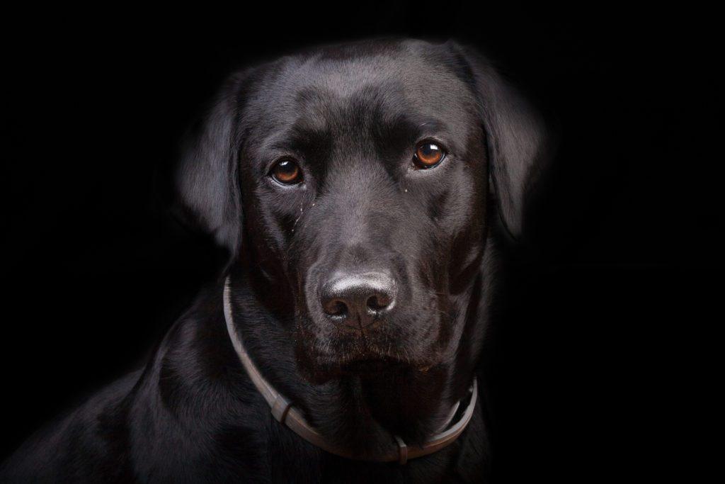 fotografare animali neri