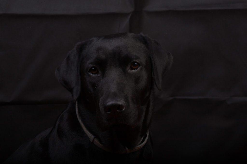 fotografare cani neri