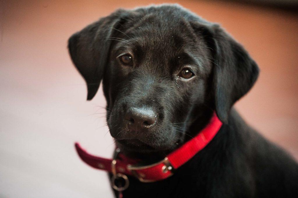 servizio fotografico cuccioli di cane