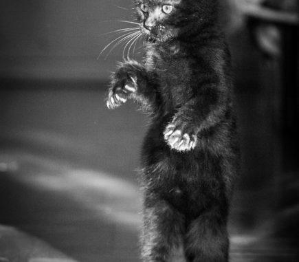 fotografo gatti