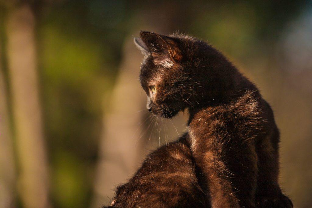 servizio fotografico per gatto
