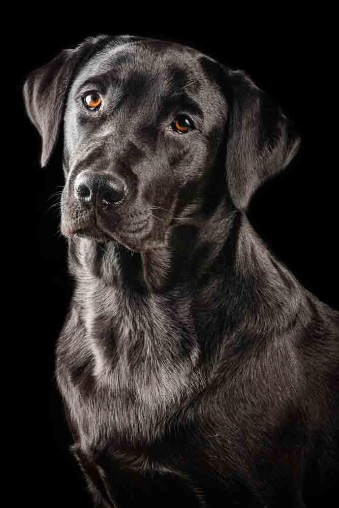 fotografo cani