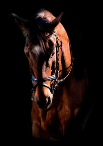 fotografo cavalli roma