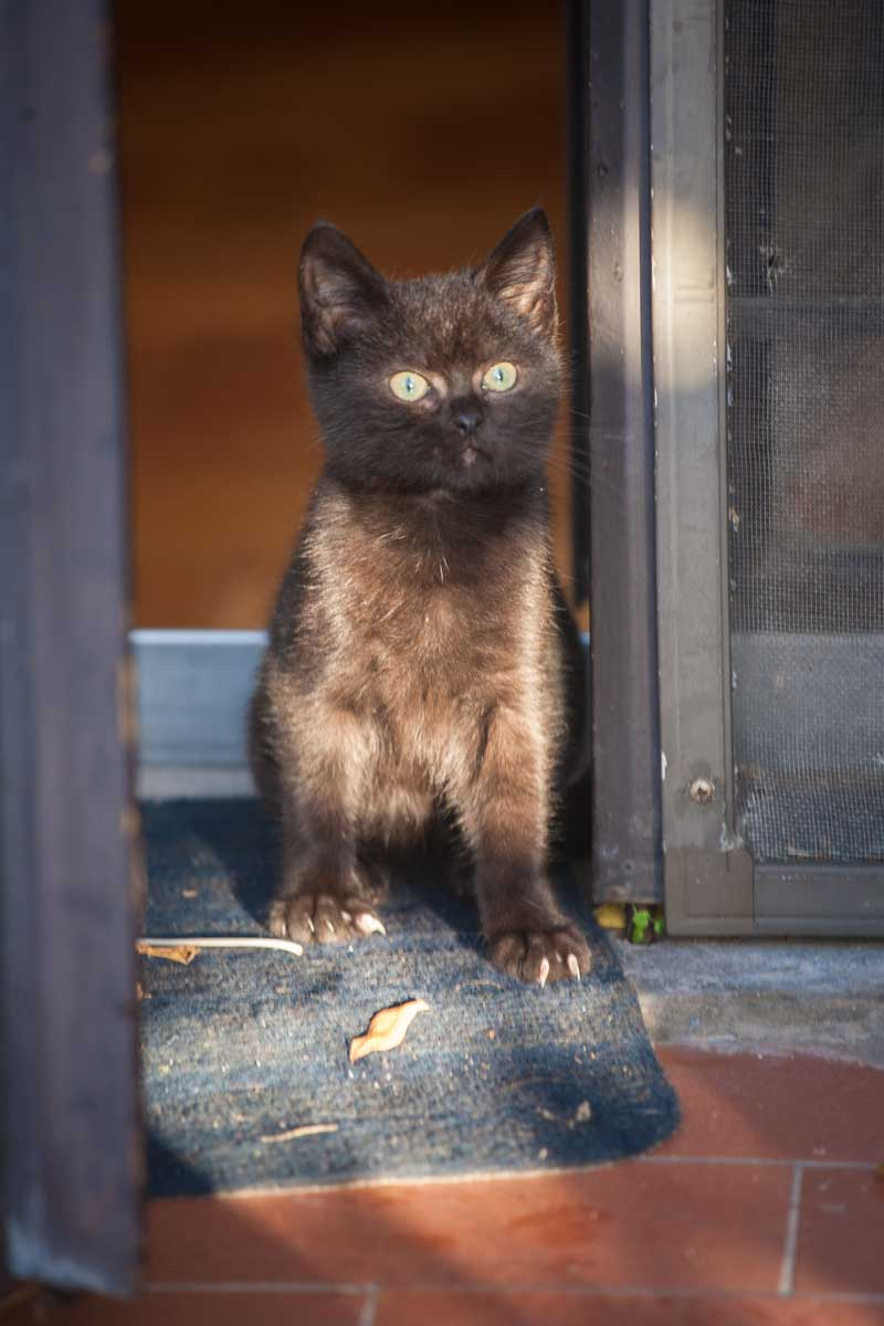 fotografo animali domestici