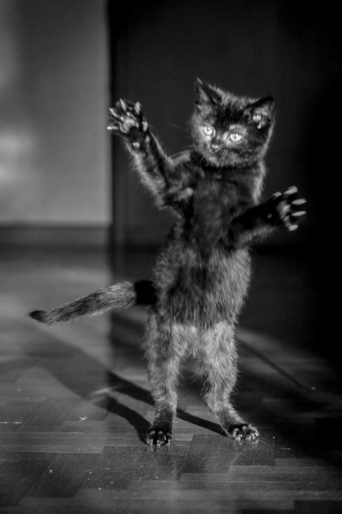 Servizi fotografici per cani e gatti