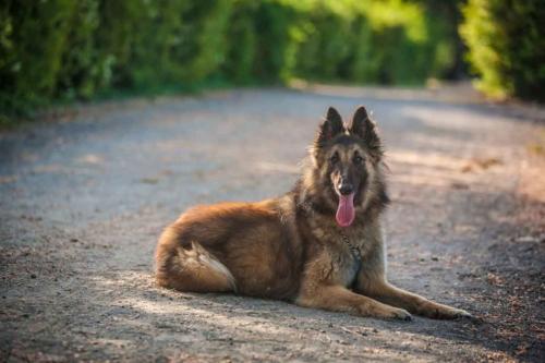 fotografo animali domestici roma