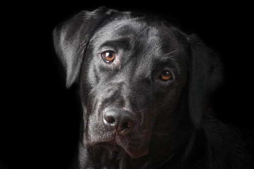 servizi fotografici per cani roma