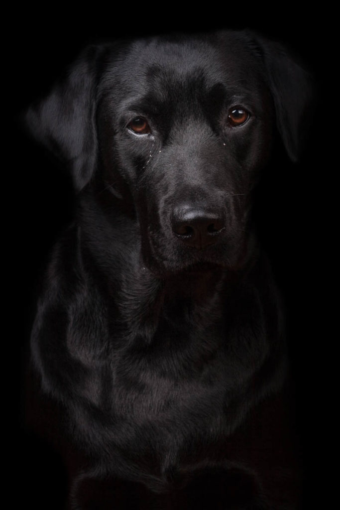 ritratto cane su sfondo nero
