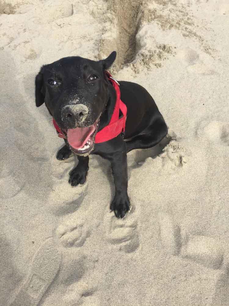 servizio fotografico cane sulla spiaggia