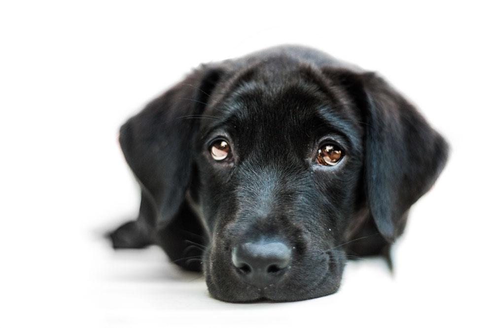 servizi fotografici animali domestici