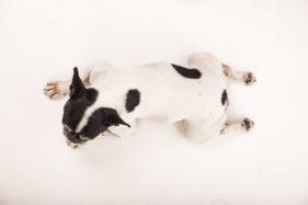 fotografia animali domestici
