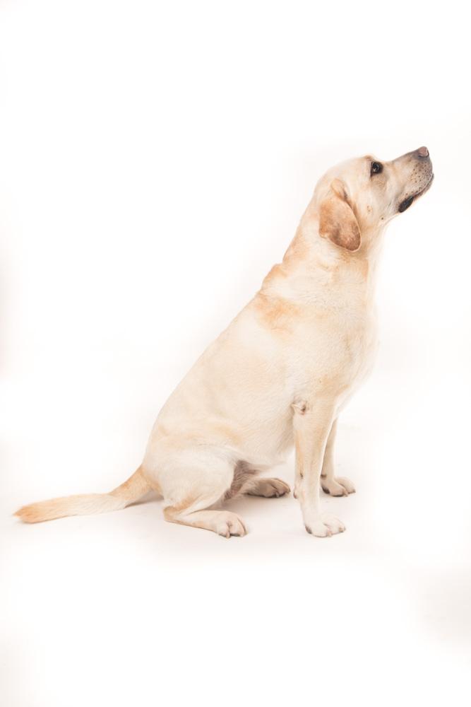 ritratto fotografico cane