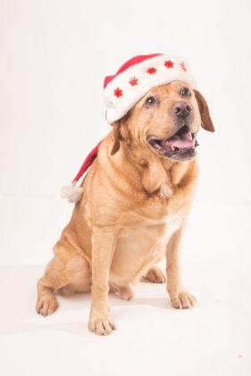 fotografo cani roma