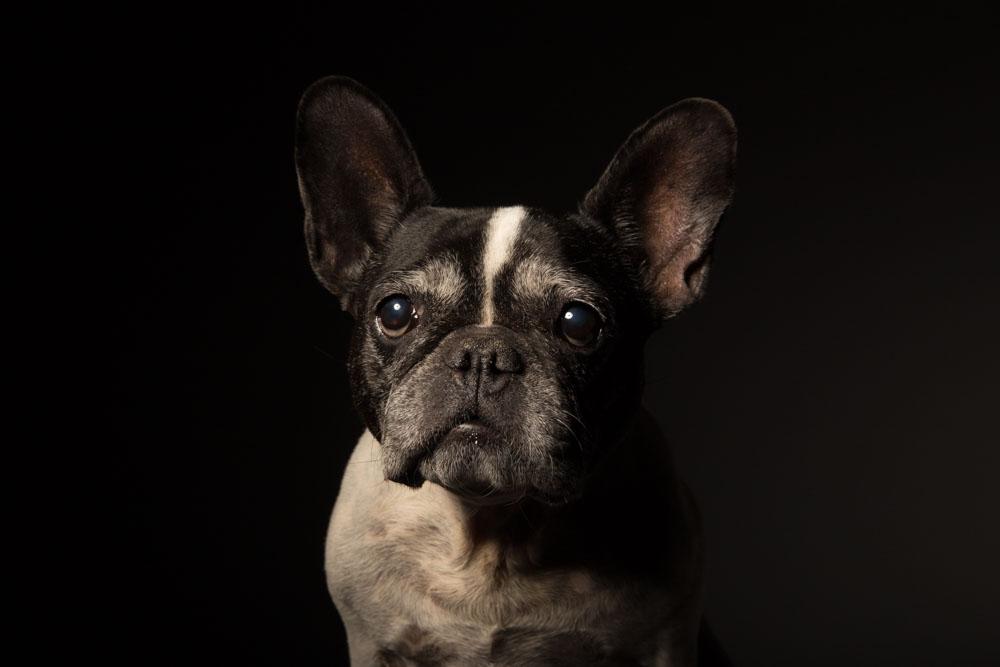 foto cane in studio