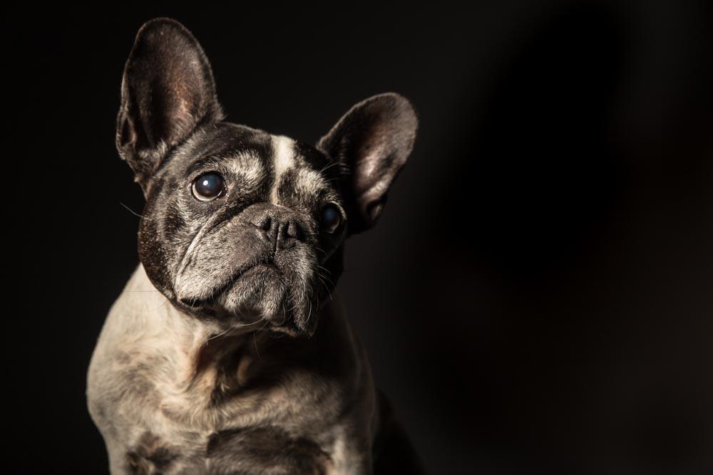 book fotografico cane