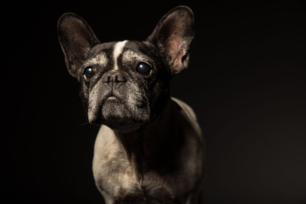 servizio fotografico cane roma