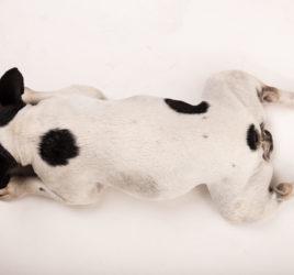 servizio fotografico per cani