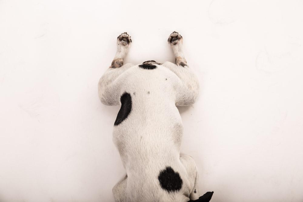 fotografo per cani roma