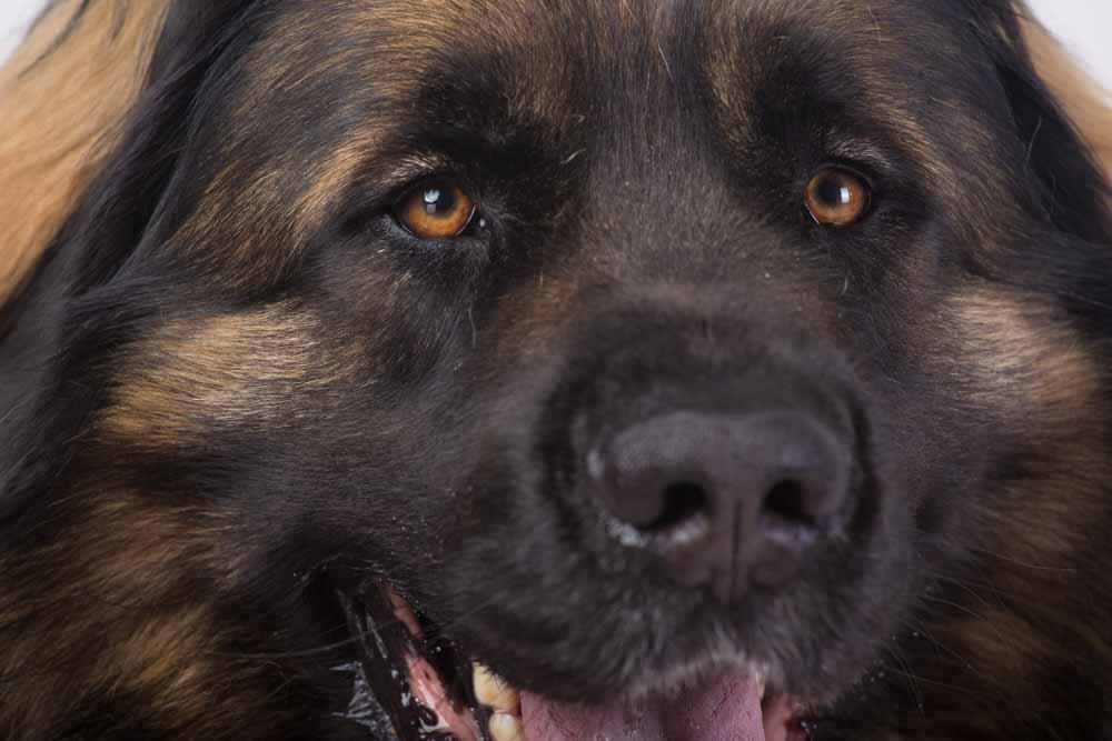 foto cane su sfondo nero