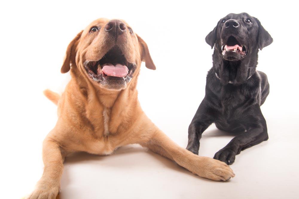 fotografie per cani roma