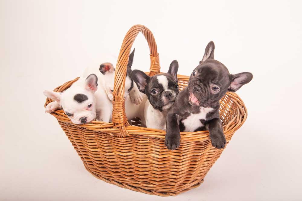 foto professionali a cuccioli di cane
