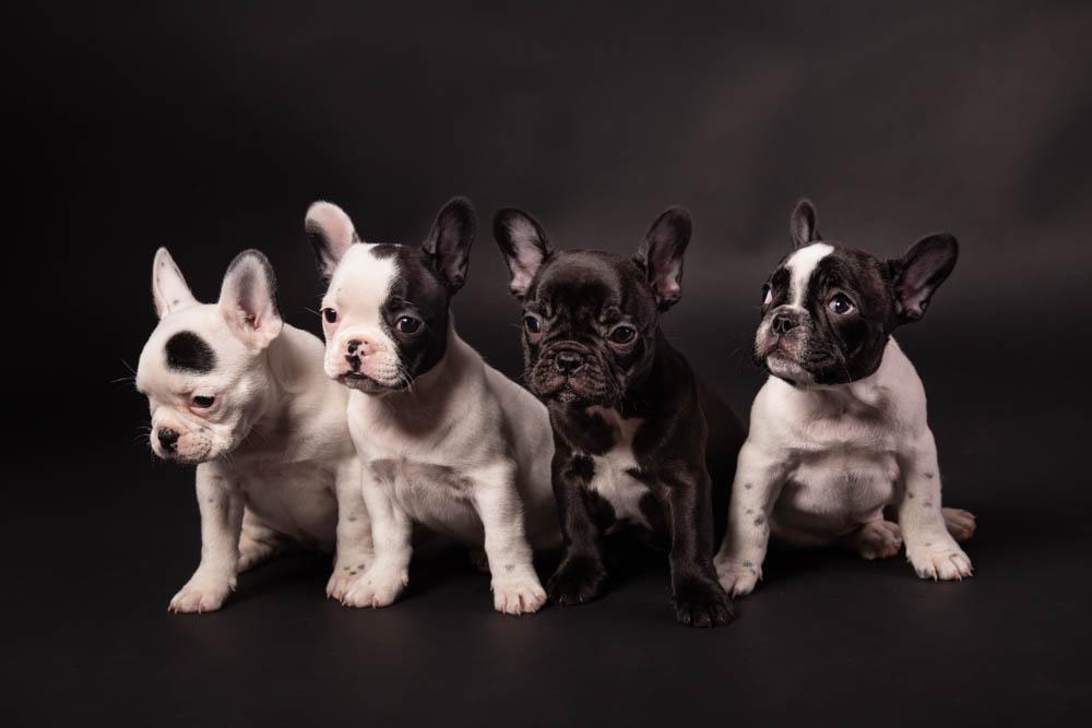 servizio fotografico cani