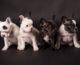 servizi fotografici professionali per animali
