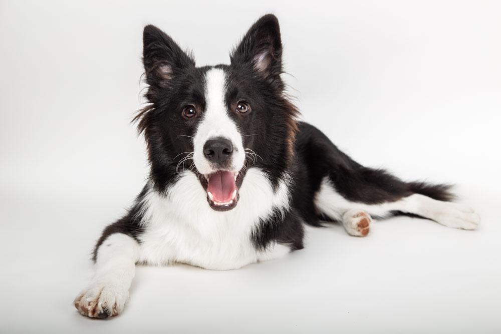 servizio fotografico per cani roma
