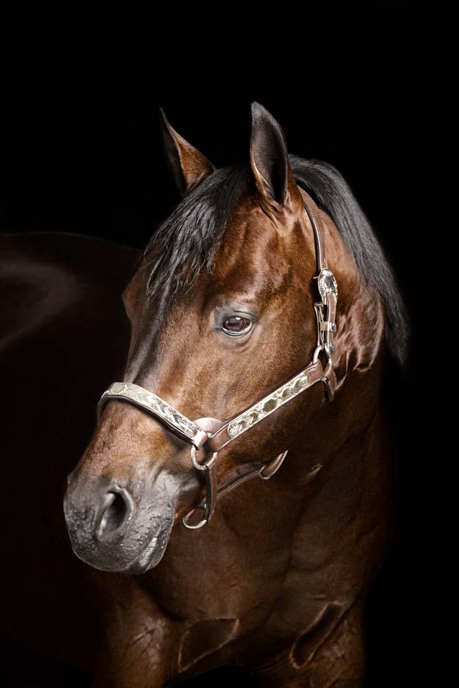 servizi fotografici per cavalli