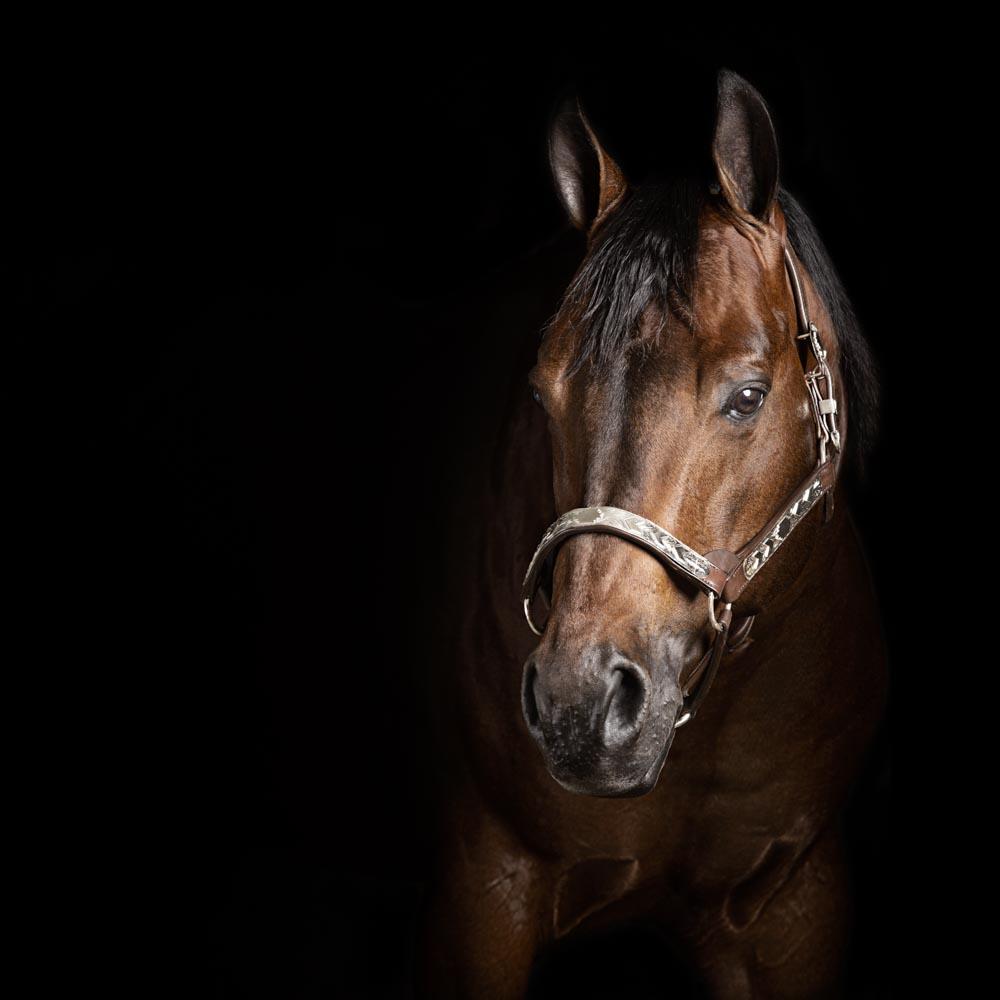 servizi fotografici professionali cavalli